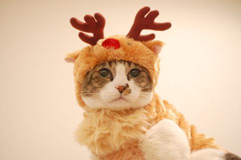 サンタコス,超絶,可愛い,猫ちゃん,画像,貼っていく007