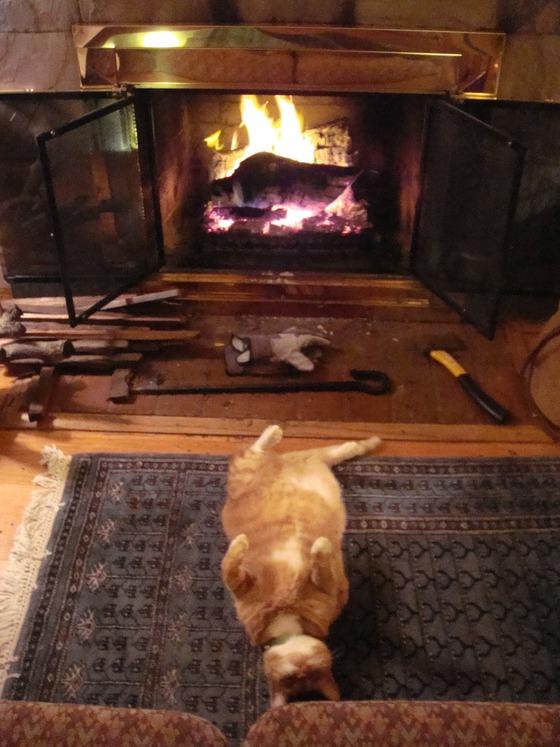 寒い,冬,ストーブ,猫,画像,貼っていく008