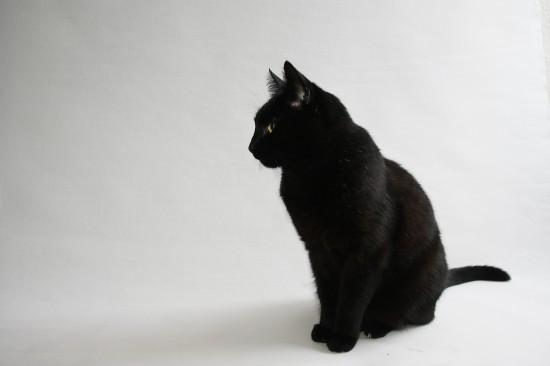 神秘的,美しい,黒猫,画像,貼っていく008