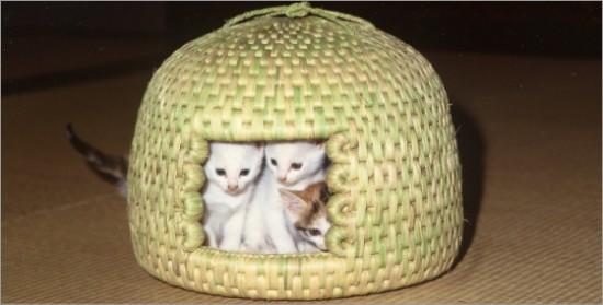 猫ちぐら,遊ぶ,可愛すぎる,猫たち,画像,貼っていく008