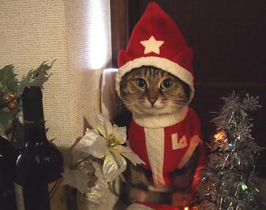 サンタコス,超絶,可愛い,猫ちゃん,画像,貼っていく008