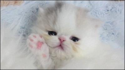 触りたく,にゃんこ,ぷにぷに,肉球,画像,貼っていく,猫008