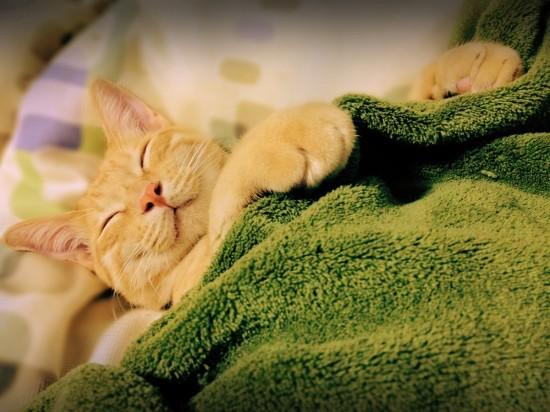 寝相,良すぎる,猫,画像,貼っていく008