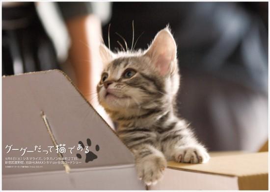 美しく,見とれ,猫,画像,貼っていく009