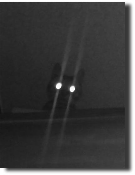 暗闇,ギラリ,目,光らせる,猫,画像,貼っていく009