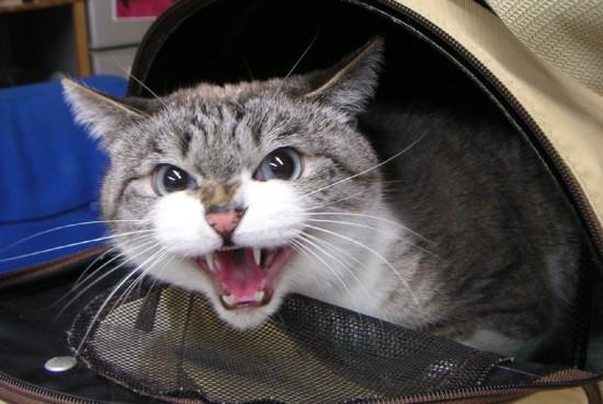 喜怒哀楽,可愛い,猫,画像,貼っていく009