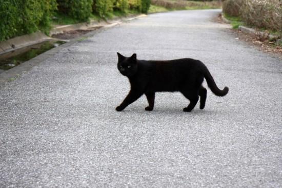 神秘的,美しい,黒猫,画像,貼っていく010