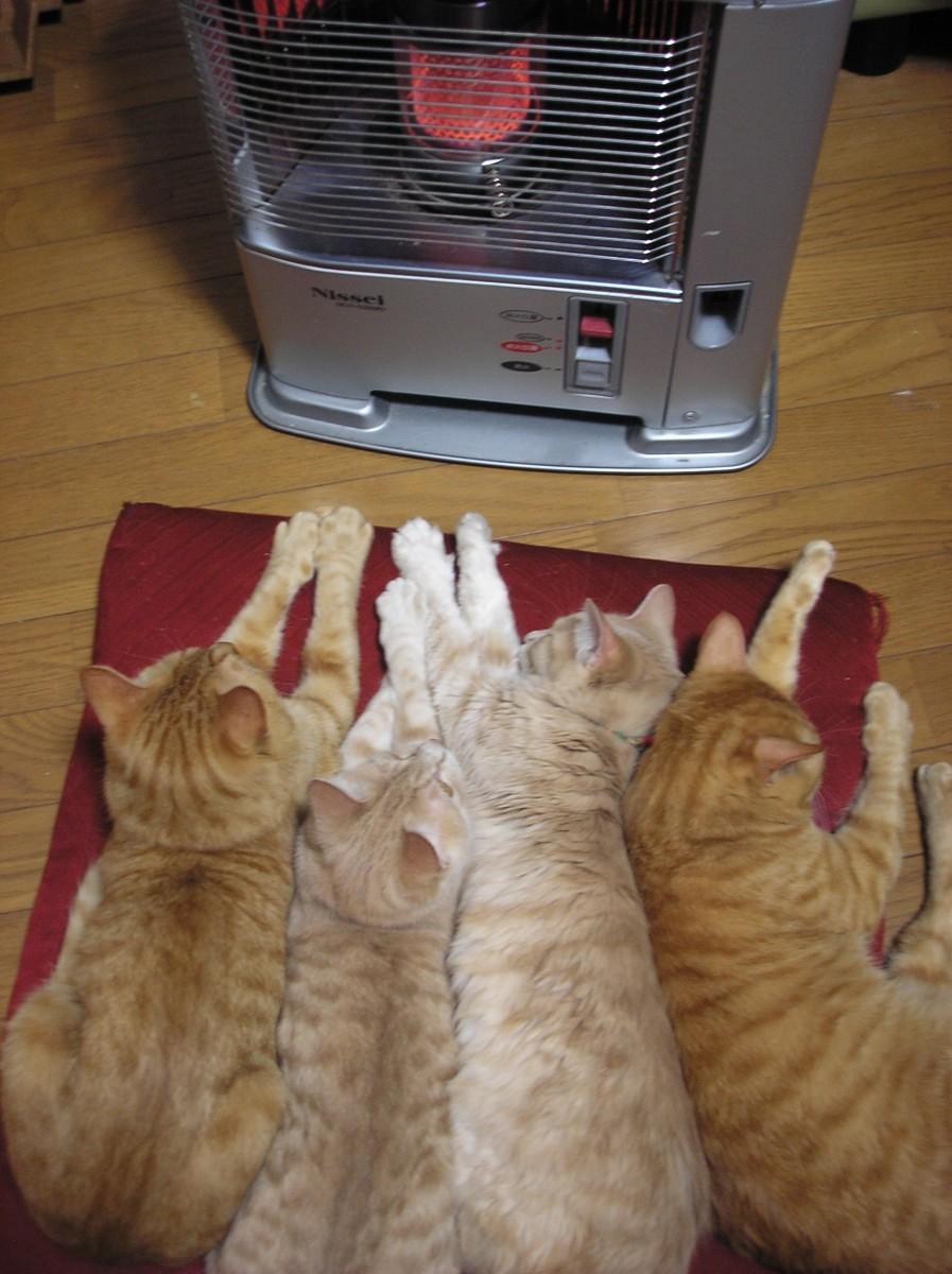 寒い,冬,ストーブ,猫,画像,貼っていく010