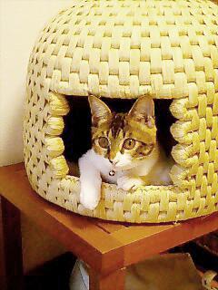 猫ちぐら,遊ぶ,可愛すぎる,猫たち,画像,貼っていく010