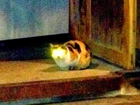暗闇,ギラリ,目,光らせる,猫,画像,貼っていく010