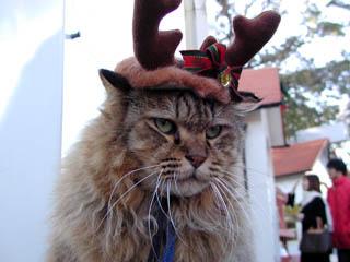サンタコス,超絶,可愛い,猫ちゃん,画像,貼っていく010