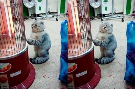 寒い,冬,ストーブ,猫,画像,貼っていく011