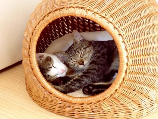 猫ちぐら,遊ぶ,可愛すぎる,猫たち,画像,貼っていく011