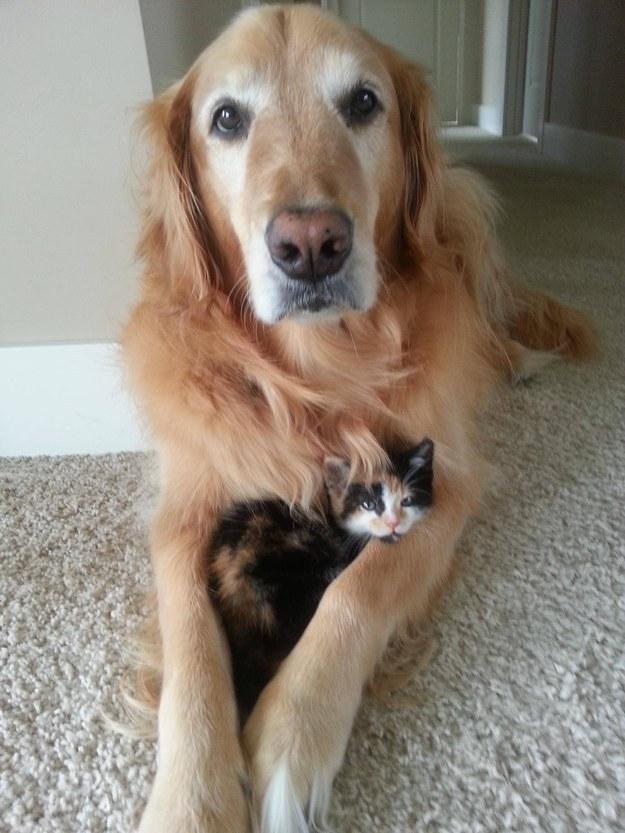 本当,仲良し,猫,犬,画像,貼っていく011