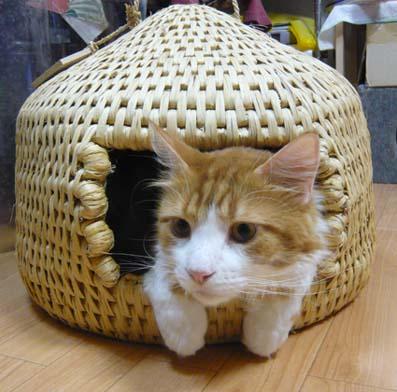 猫ちぐら,遊ぶ,可愛すぎる,猫たち,画像,貼っていく012