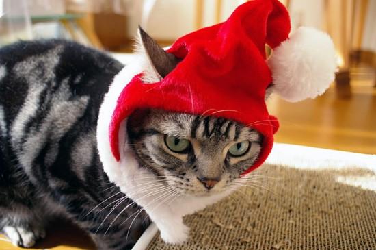 サンタコス,超絶,可愛い,猫ちゃん,画像,貼っていく012