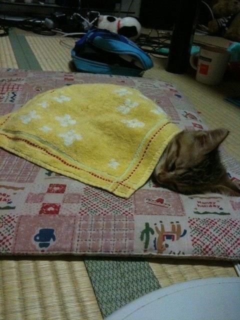 寝相,良すぎる,猫,画像,貼っていく012