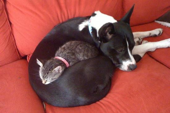 本当,仲良し,猫,犬,画像,貼っていく012