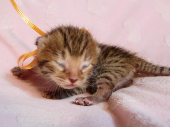 超絶,可愛い,猫,赤ちゃん,画像,貼っていく013