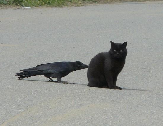 神秘的,美しい,黒猫,画像,貼っていく013