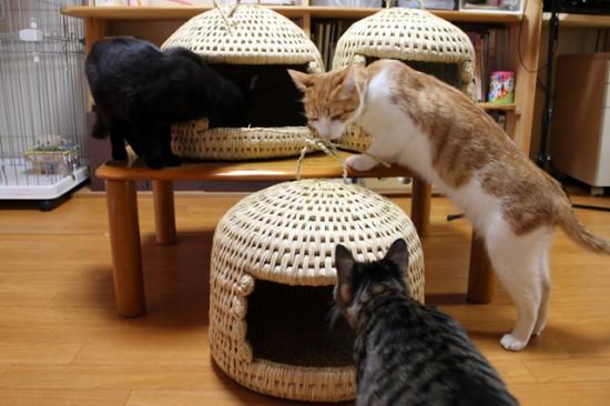 猫ちぐら,遊ぶ,可愛すぎる,猫たち,画像,貼っていく013