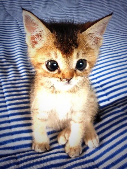 可愛すぎ,悶える,猫,画像,貼っていく013