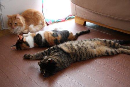 寝相,良すぎる,猫,画像,貼っていく013