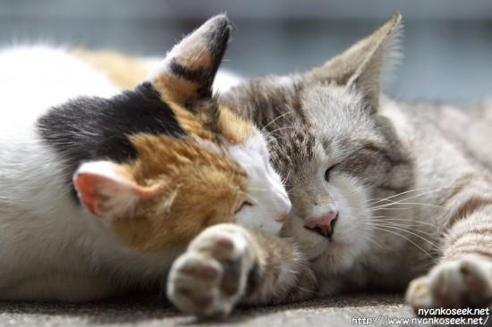 ぐでん,可愛い,のんびり,猫,画像,貼っていく013