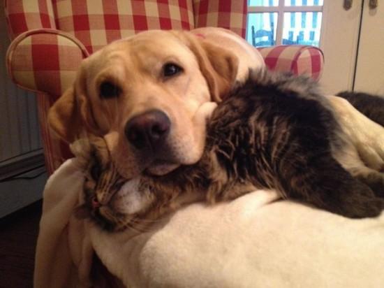本当,仲良し,猫,犬,画像,貼っていく013