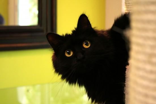 世界,可愛い,猫,画像,貼っていく014