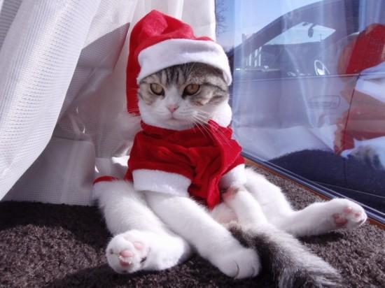 サンタコス,超絶,可愛い,猫ちゃん,画像,貼っていく014