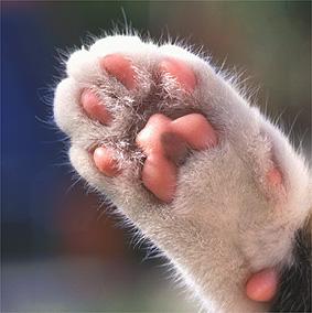 触りたく,にゃんこ,ぷにぷに,肉球,画像,貼っていく,猫014