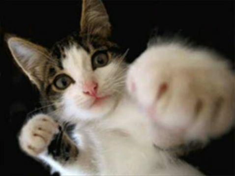 可愛すぎて,にやにや,猫,画像,貼っていく014