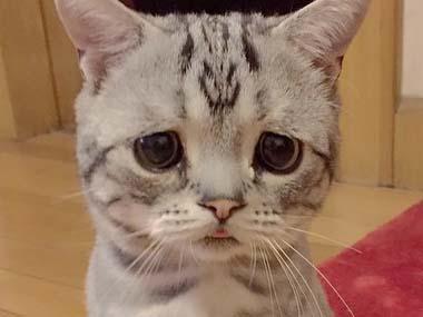 喜怒哀楽,可愛い,猫,画像,貼っていく014
