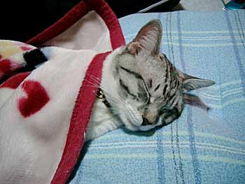 寝相,良すぎる,猫,画像,貼っていく015