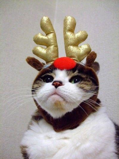 サンタコス,超絶,可愛い,猫ちゃん,画像,貼っていく015
