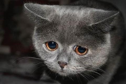 喜怒哀楽,可愛い,猫,画像,貼っていく015