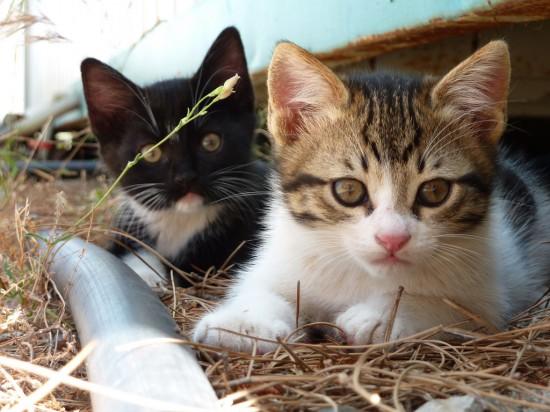 世界,可愛い,猫,画像,貼っていく016