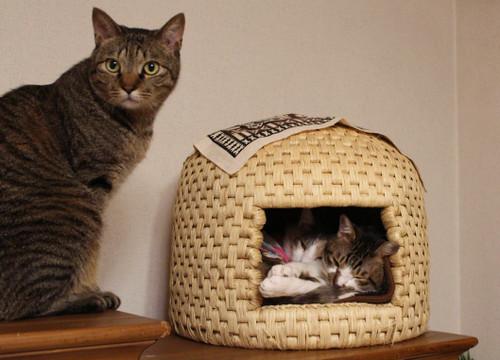 猫ちぐら,遊ぶ,可愛すぎる,猫たち,画像,貼っていく016