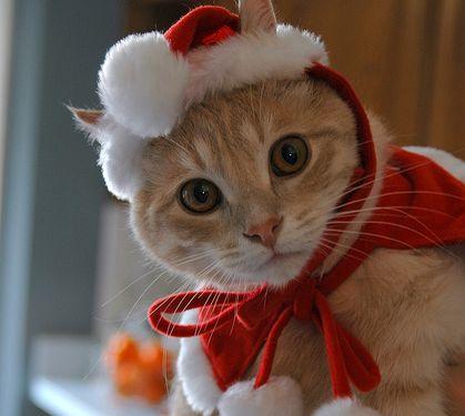サンタコス,超絶,可愛い,猫ちゃん,画像,貼っていく016