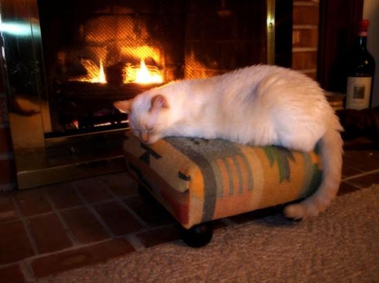寒い,冬,ストーブ,猫,画像,貼っていく016