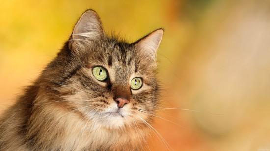 美しく,見とれ,猫,画像,貼っていく017