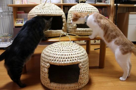 猫ちぐら,遊ぶ,可愛すぎる,猫たち,画像,貼っていく017