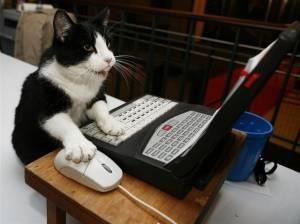 まるで,人間,猫,画像,貼っていく017