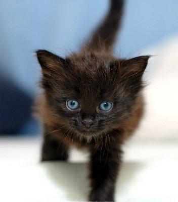 神秘的,美しい,黒猫,画像,貼っていく018