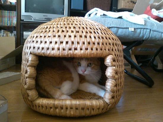 猫ちぐら,遊ぶ,可愛すぎる,猫たち,画像,貼っていく018