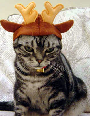 サンタコス,超絶,可愛い,猫ちゃん,画像,貼っていく018