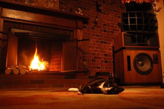 寒い,冬,ストーブ,猫,画像,貼っていく018