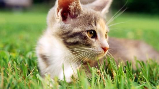 美しく,見とれ,猫,画像,貼っていく019