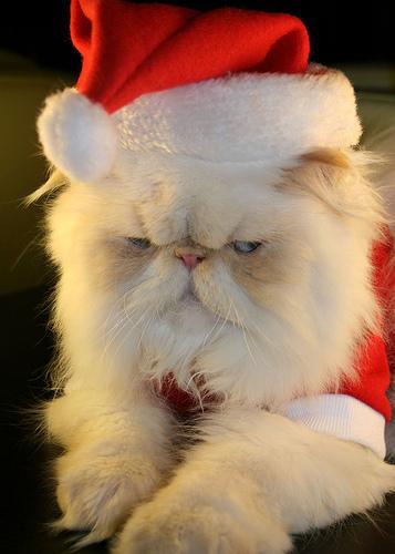 サンタコス,超絶,可愛い,猫ちゃん,画像,貼っていく019